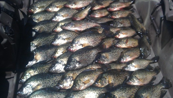 Fishing_crappies_2013.jpg